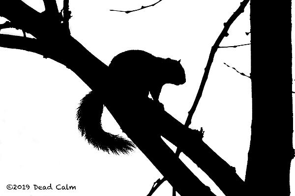 Dawg Pics' New Adventures of the D500 (and maybe the D300)-squirrel-silh-hi-res-n-500_0702.jpg