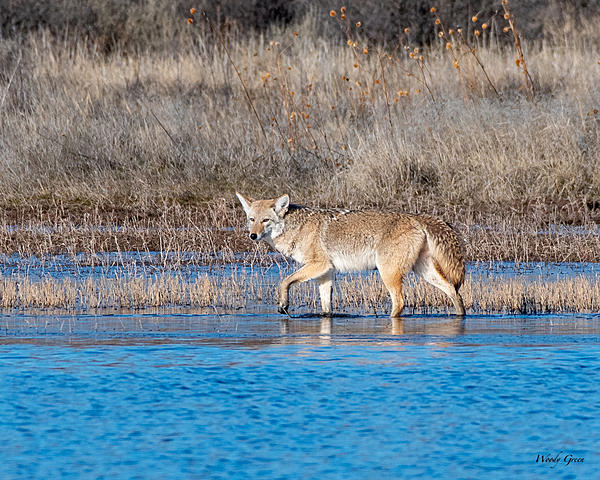 Woody's 2020 Adventure-coyotewater-513.jpg