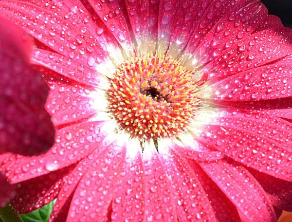 Project 254 Wendy's Wonders-pink-flower-close-up.jpg