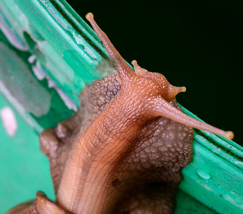 Michael's Random Photos-snail-1.jpg