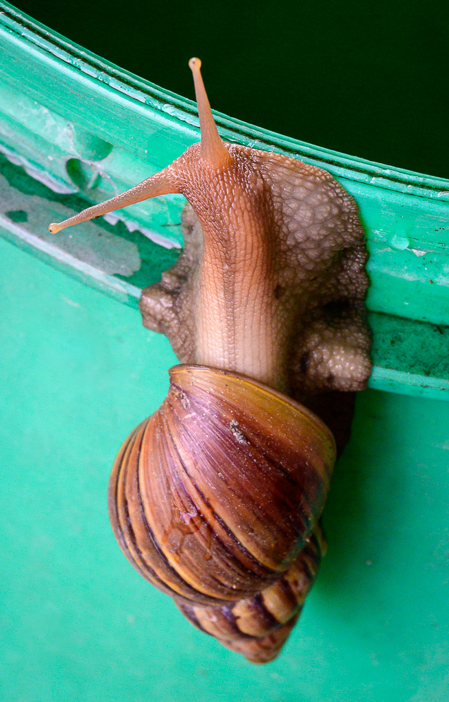 Michael's Random Photos-snail-2.jpg