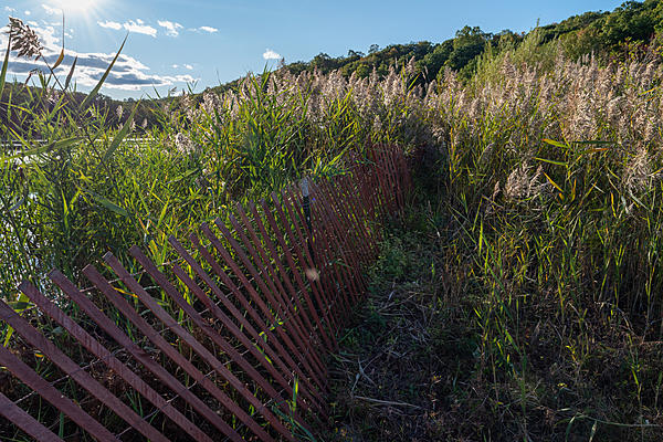 Dangerous Spouse Pics-fence-reeds-not-stacked-1.jpg