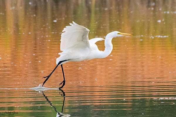 Woody's 2020 Adventure-greategret-621.jpg