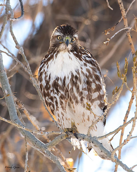 Woody's 2021 Photon Quest-redtail-774.jpg
