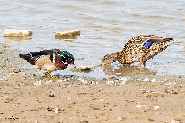 Woody's 2021 Photon Quest-woodmalardduck-783.jpg