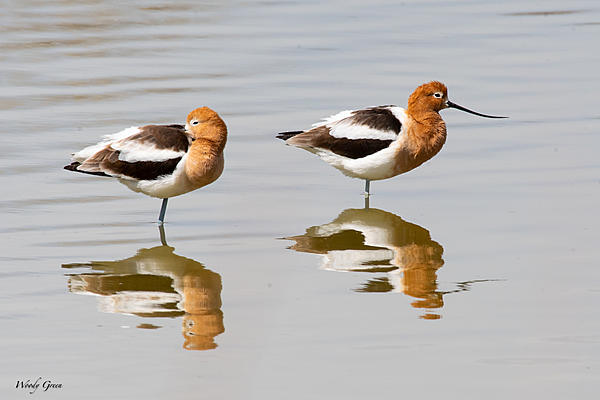 Woody's 2021 Photon Quest-avocetssleeping-848.jpg
