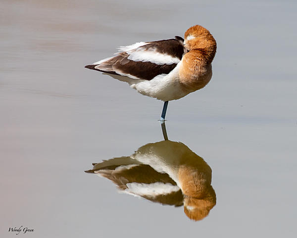 Woody's 2021 Photon Quest-avocetssleeping-849.jpg