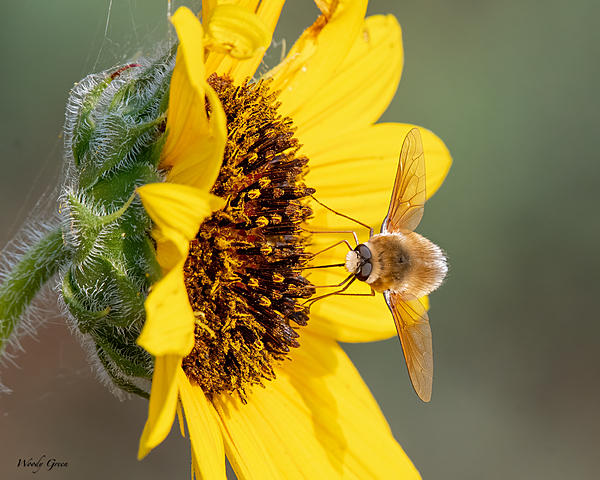 Woody's 2021 Photon Quest-beefly-980.jpg