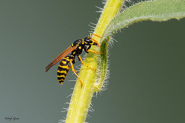 Woody's 2021 Photon Quest-wasp-981.jpg