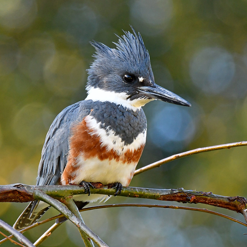 """wev's """"whose idea was this anyway?"""" 365 for 2017-kingfisher5.jpg"""