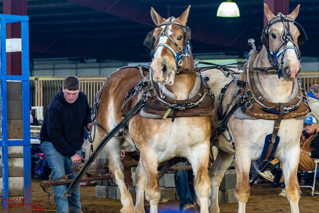Danno's 365 for 2018 Going to Give it a Shot Again...-mid-winter-horse-pull-2816.jpg