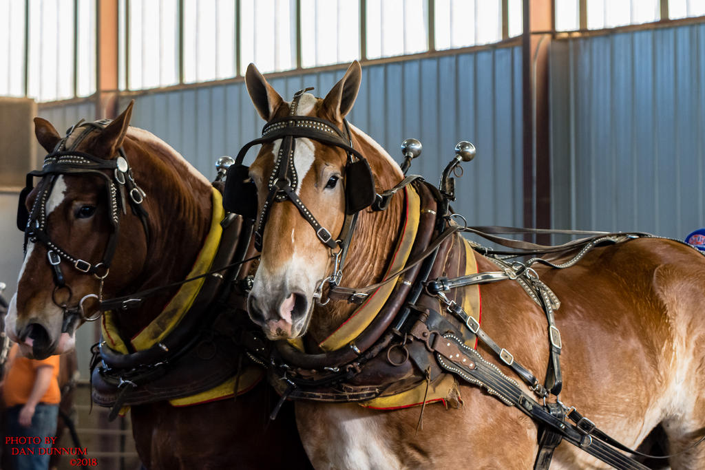 Danno's 365 for 2018 Going to Give it a Shot Again...-mid-winter-horse-pull-3111.jpg