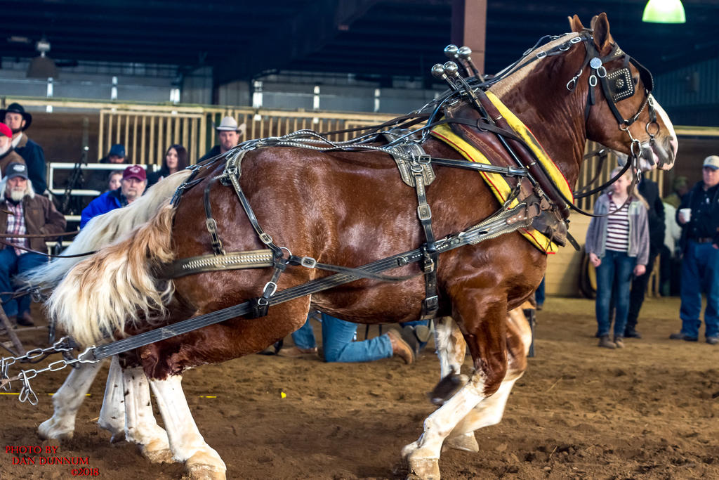 Danno's 365 for 2018 Going to Give it a Shot Again...-mid-winter-horse-pull-3133.jpg