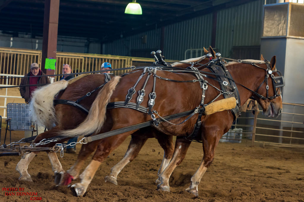 Danno's 365 for 2018 Going to Give it a Shot Again...-mid-winter-horse-pull-3153.jpg