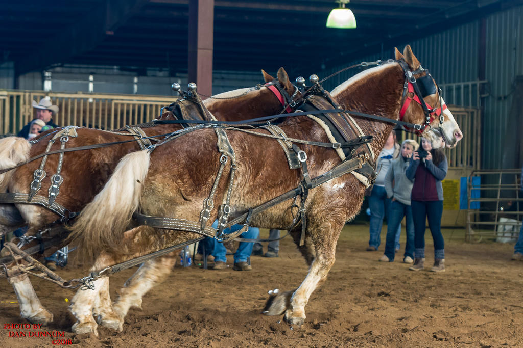 Danno's 365 for 2018 Going to Give it a Shot Again...-mid-winter-horse-pull-3225.jpg