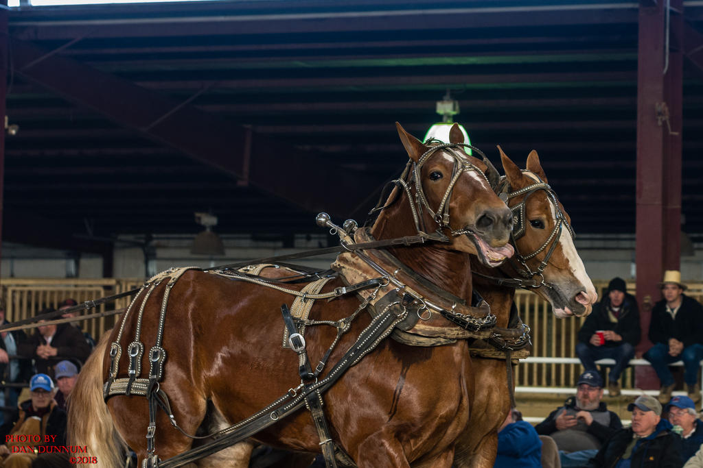 Danno's 365 for 2018 Going to Give it a Shot Again...-mid-winter-horse-pull-3241.jpg