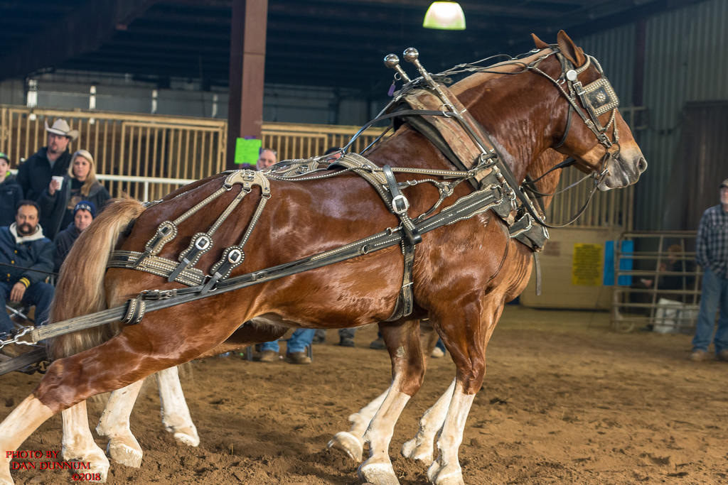 Danno's 365 for 2018 Going to Give it a Shot Again...-mid-winter-horse-pull-3263.jpg
