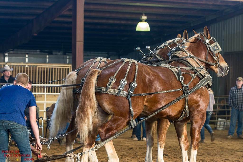 Danno's 365 for 2018 Going to Give it a Shot Again...-mid-winter-horse-pull-3264.jpg