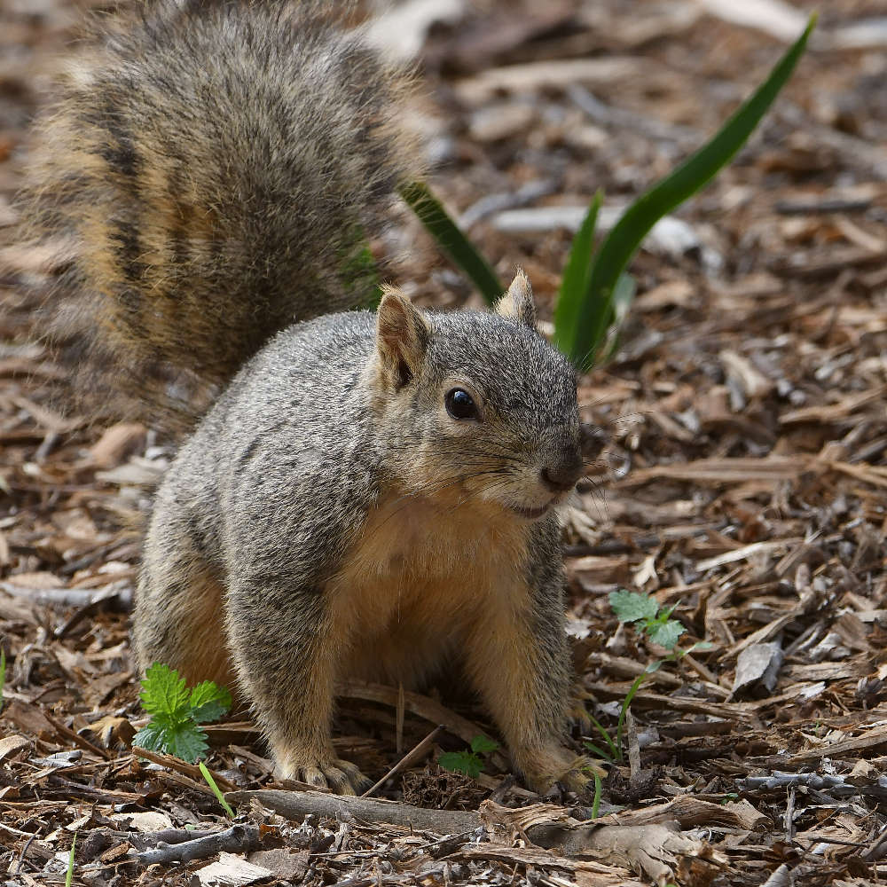 """wev's """"I can't believe I'm doing this again. . ."""" 365 for 2018-squirrel.jpg"""