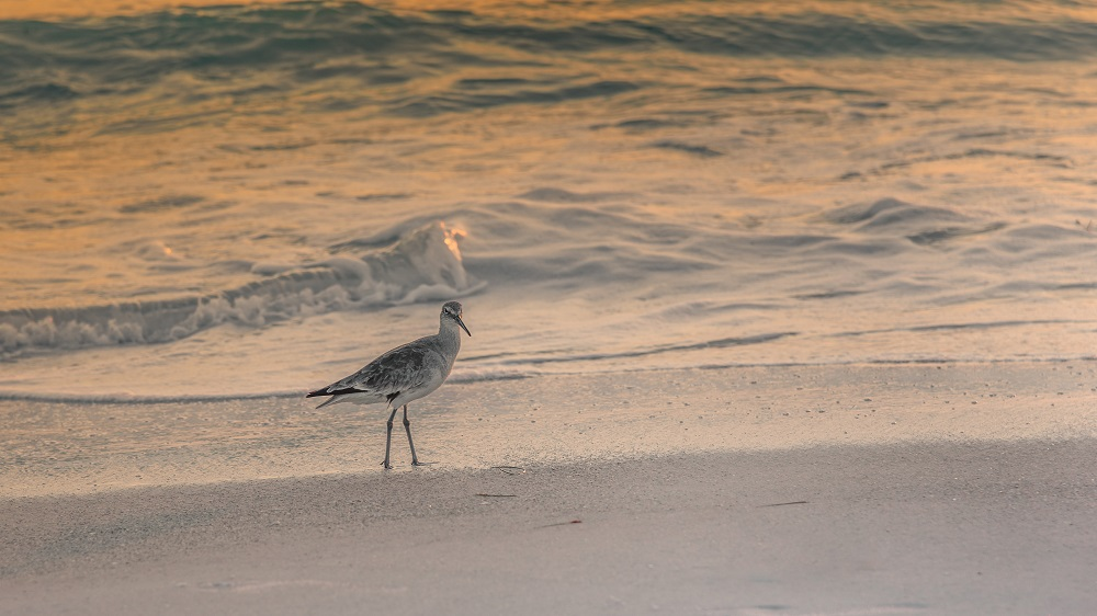 """Blacktop's """"Wildlife, Tenne-scenery and all kinds of other stuff"""" for 2018.-bradenton-beach-4.jpg"""