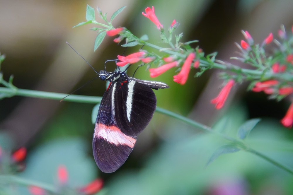 """Blacktop's """"Wildlife, Tenne-scenery and all kinds of other stuff"""" for 2018.-butterfly-gardens-gainsville-fl-.jpg"""