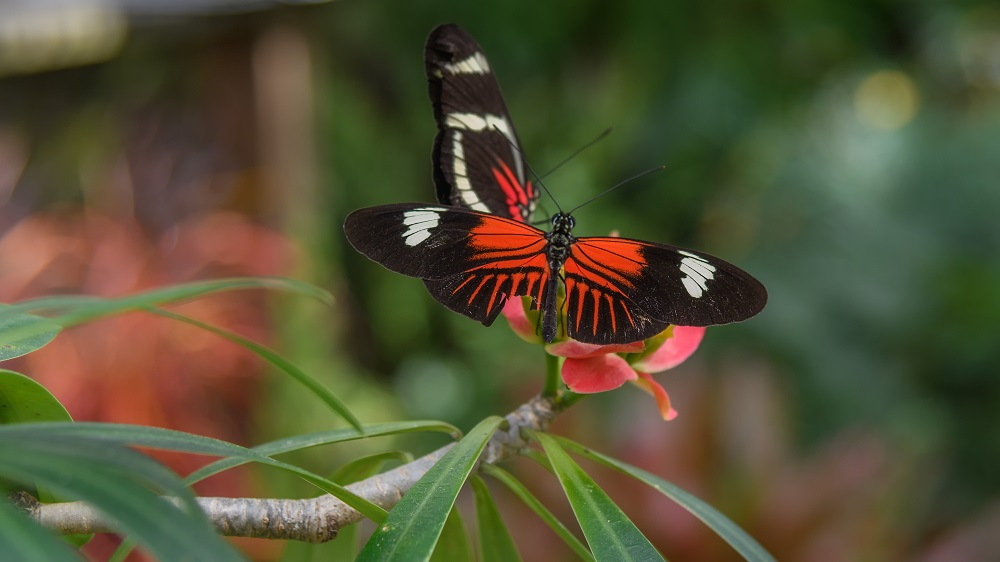 """Blacktop's """"Wildlife, Tenne-scenery and all kinds of other stuff"""" for 2018.-butterfly-gardens-gainsville-fl-5.jpg"""