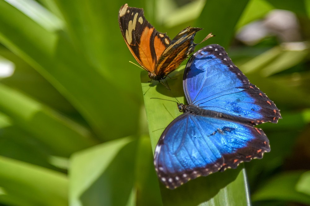 """Blacktop's """"Wildlife, Tenne-scenery and all kinds of other stuff"""" for 2018.-butterfly-gardens-gainsville-fl-6.jpg"""
