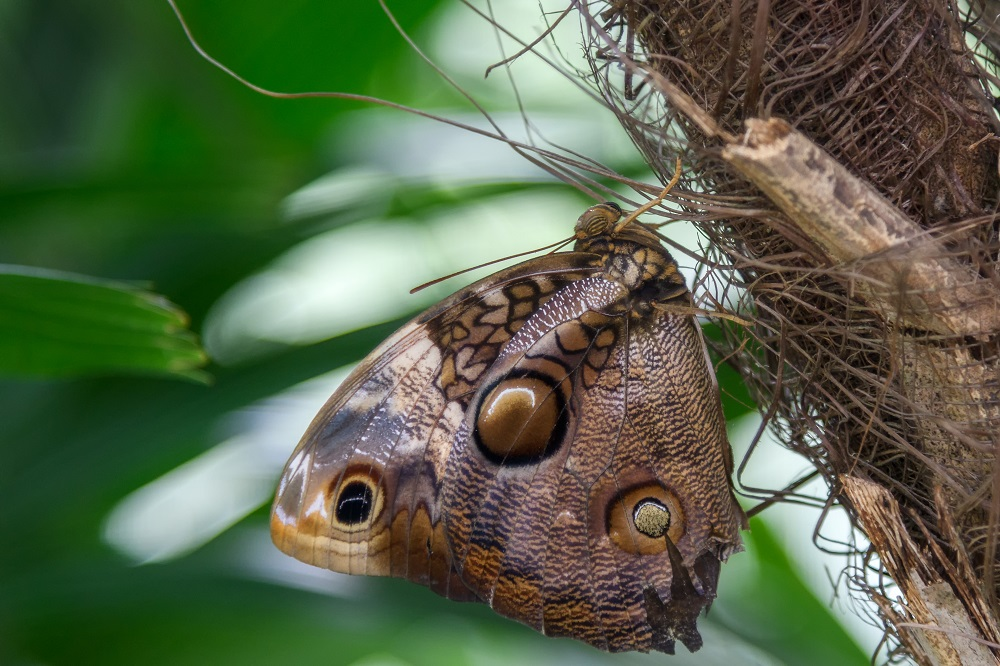 """Blacktop's """"Wildlife, Tenne-scenery and all kinds of other stuff"""" for 2018.-butterfly-gardens-gainsville-fl-7.jpg"""