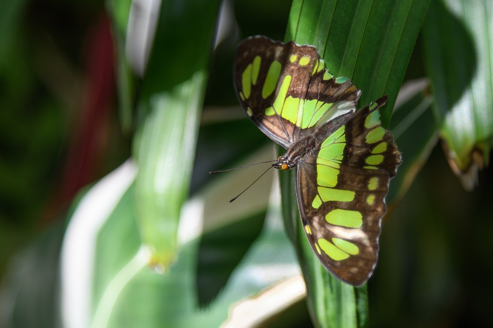 """Blacktop's """"Wildlife, Tenne-scenery and all kinds of other stuff"""" for 2018.-butterfly-gardens-gainsville-fl-9.jpg"""