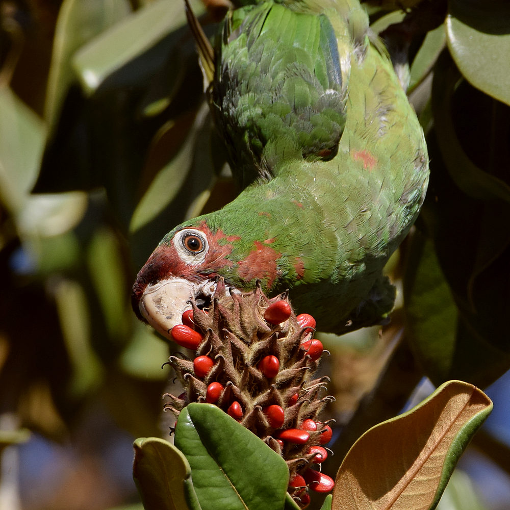 """wev's """"I can't believe I'm doing this again. . ."""" 365 for 2018-parrot2.jpg"""