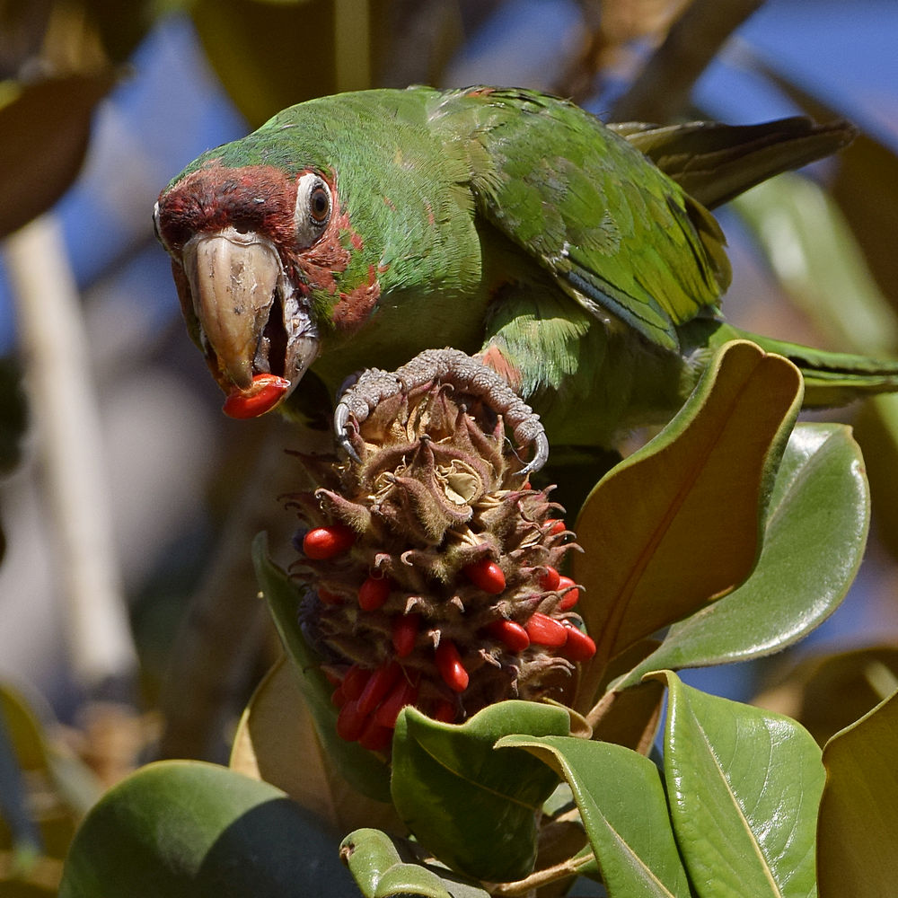 """wev's """"I can't believe I'm doing this again. . ."""" 365 for 2018-parrot4.jpg"""