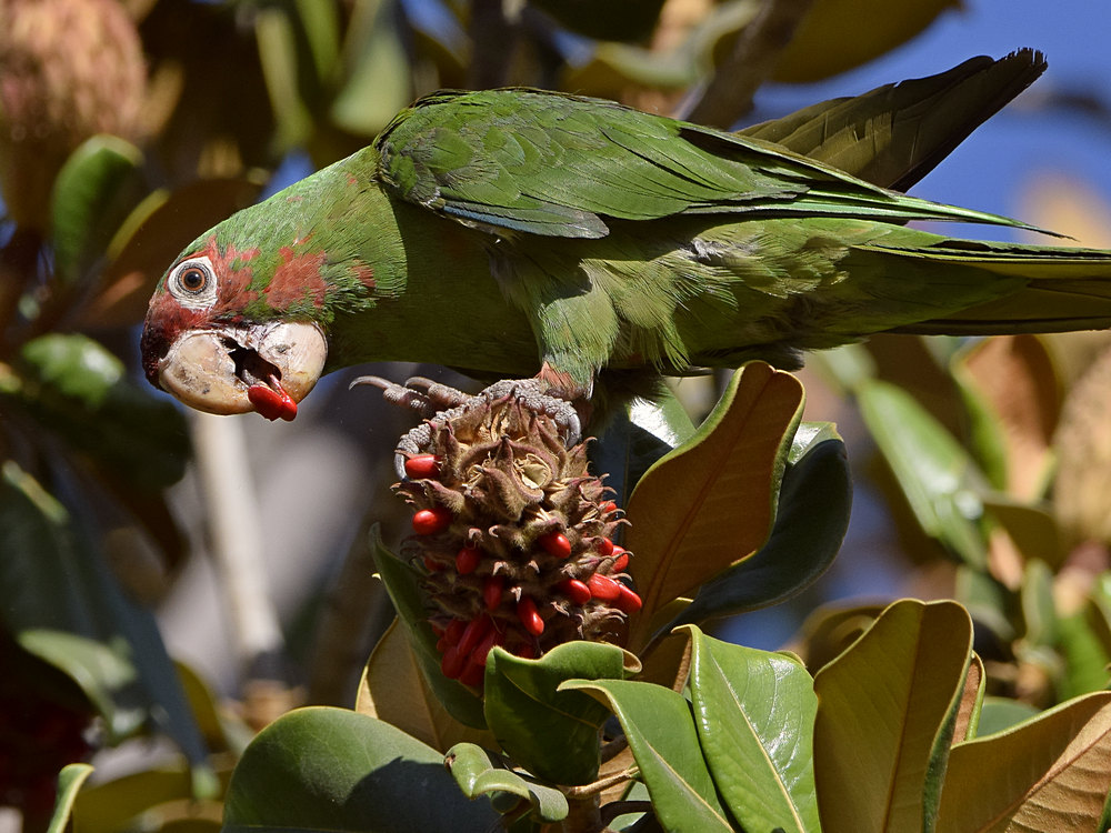 """wev's """"I can't believe I'm doing this again. . ."""" 365 for 2018-parrot3.jpg"""