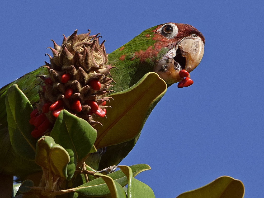 """wev's """"I can't believe I'm doing this again. . ."""" 365 for 2018-parrot5.jpg"""