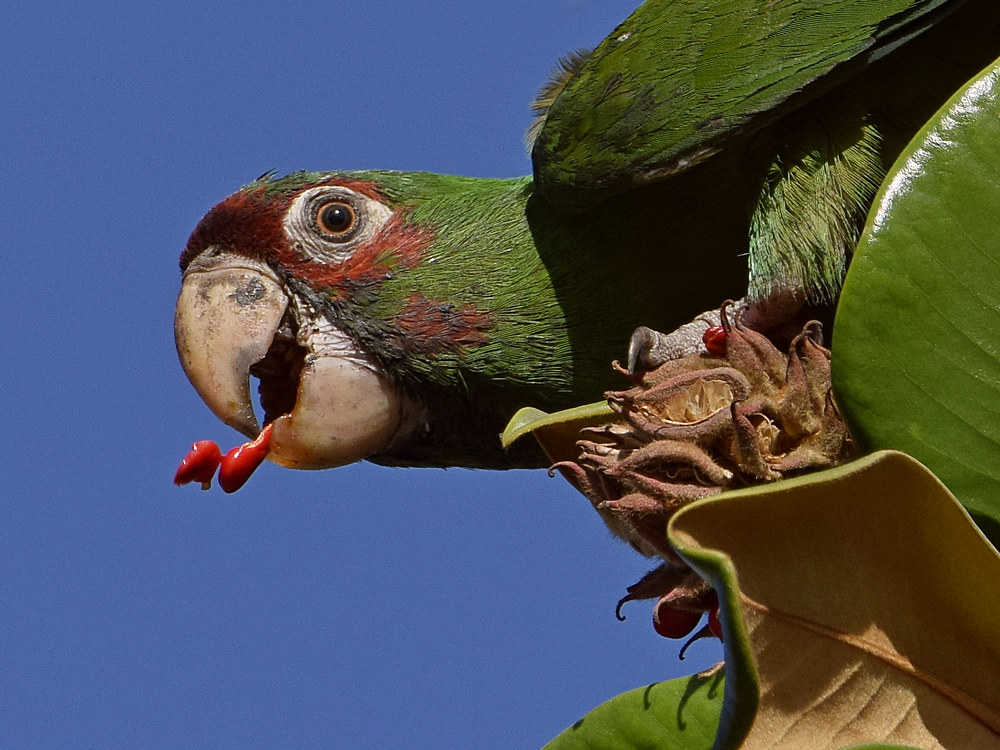 """wev's """"I can't believe I'm doing this again. . ."""" 365 for 2018-parrot10.jpg"""