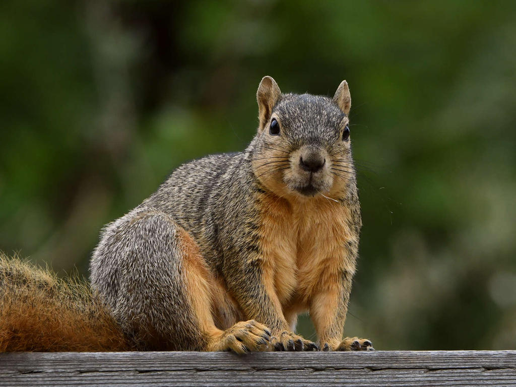 wev's 366 in 2020-squirrel.jpg