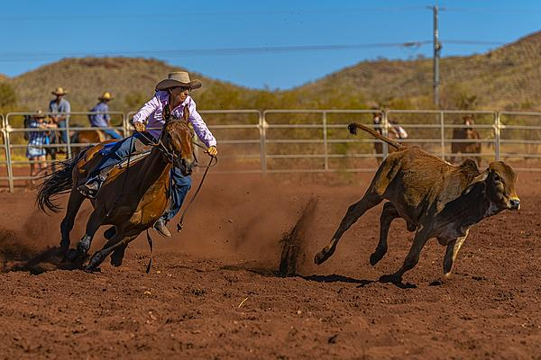 Aussie Local Rodeo-campdraft-1.jpg