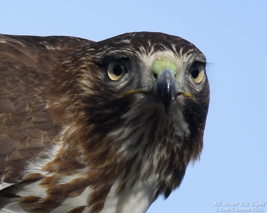 What are your thoughts on this....-hawk-eyelashes-low-res.jpg