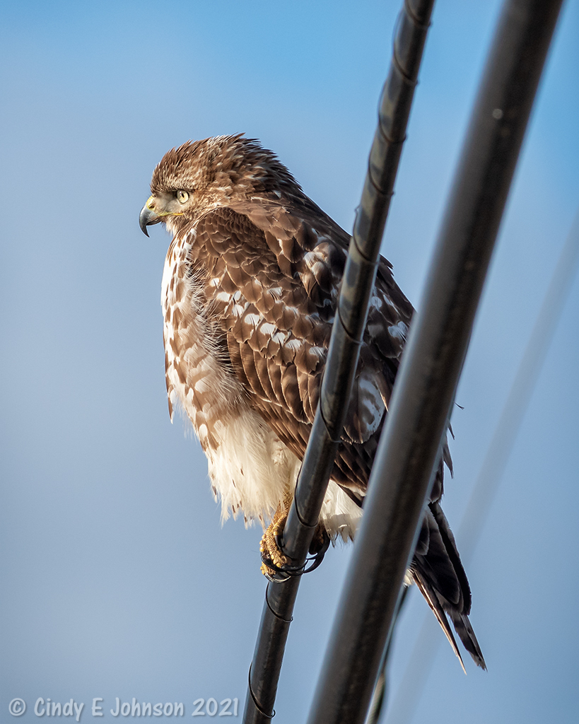 300mm f4 IF-ED with 1.4 tc-_dsc2473-low-res.jpg