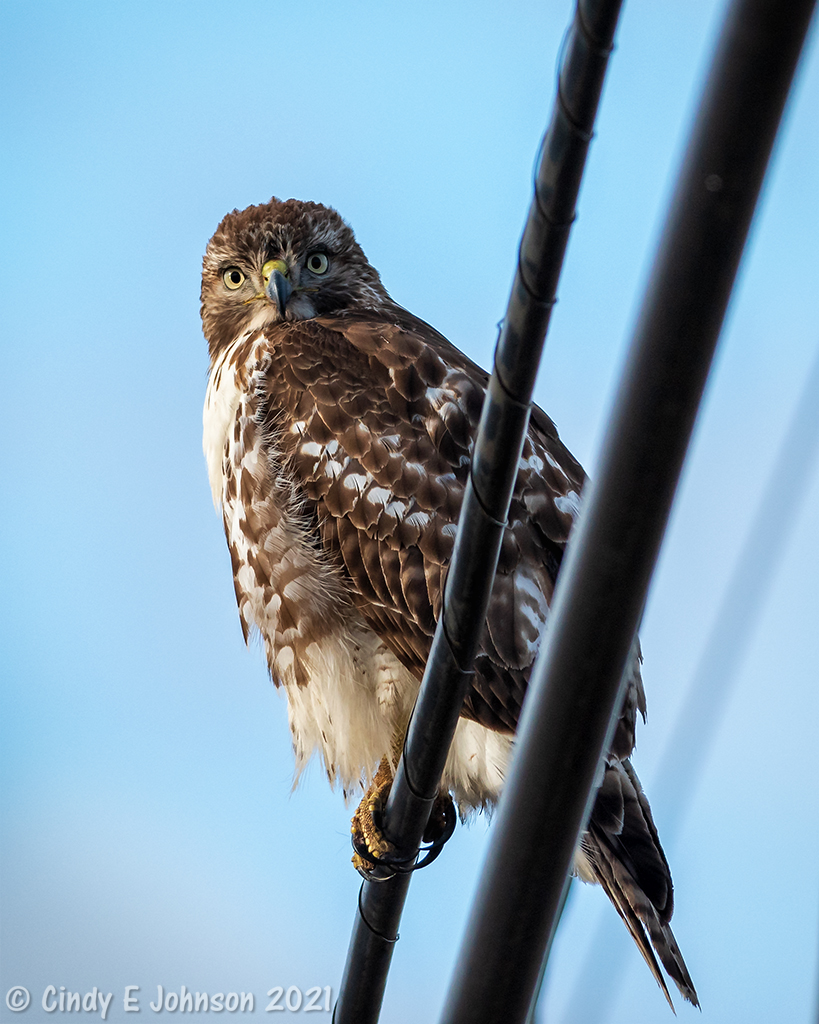 300mm f4 IF-ED with 1.4 tc-_dsc2465-low-res.jpg