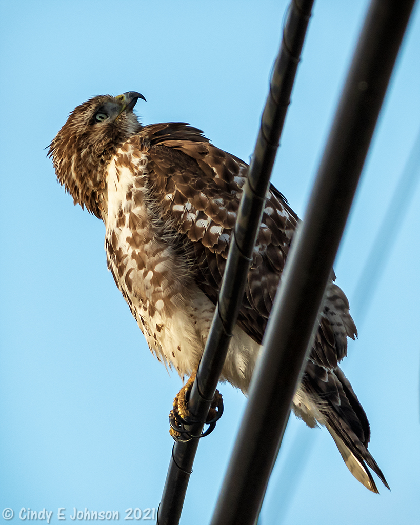 300mm f4 IF-ED with 1.4 tc-_dsc2444-low-res.jpg