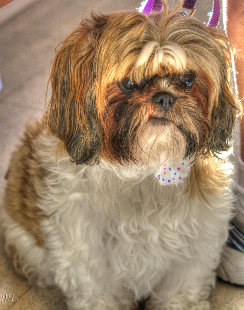 How to photograph dogs-d7100-3-vet-dogs-hd2a-cropped.jpg