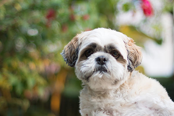 How to photograph dogs-dsc_0353.jpg