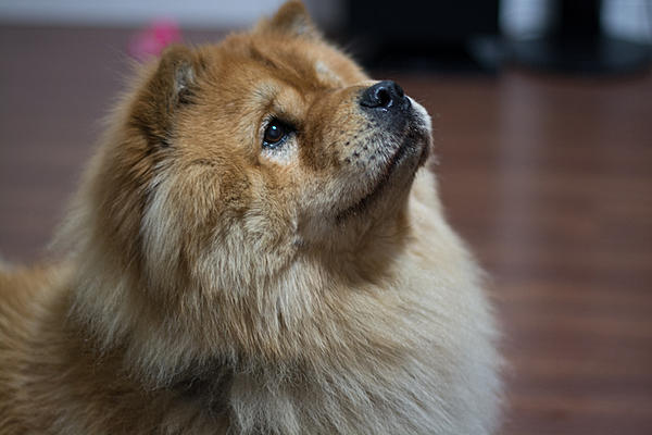 How to photograph dogs-dsc_0407.jpg