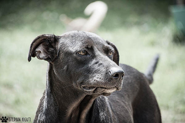 How to photograph dogs-_dsc2607.jpg