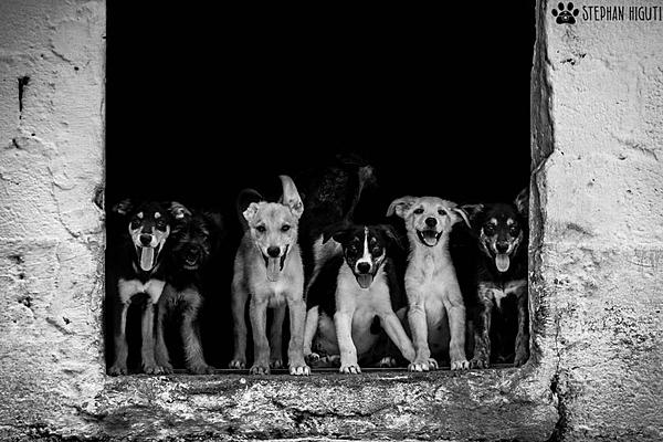 How to photograph dogs-_dsc2679.jpg