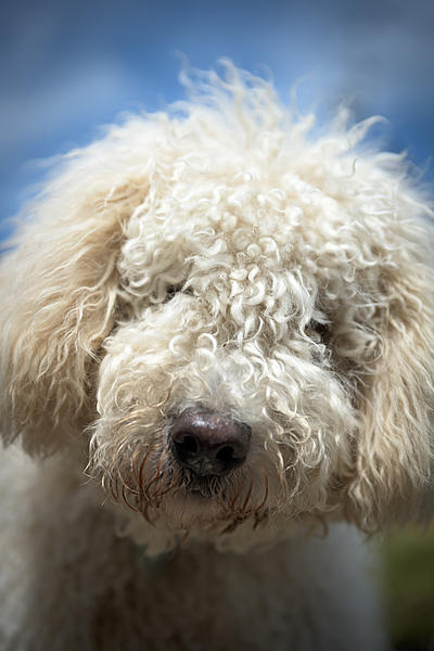 How to photograph dogs-dsc_0031a.jpg