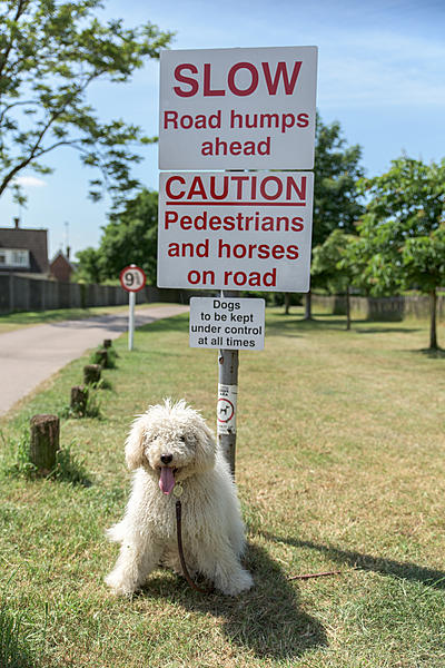 How to photograph dogs-dsc_0152.jpg