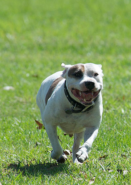 How to photograph dogs-7253204728_5e62382f0a_b.jpg