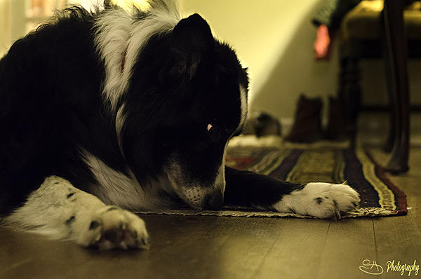 How to photograph dogs-smelly-feet.jpg