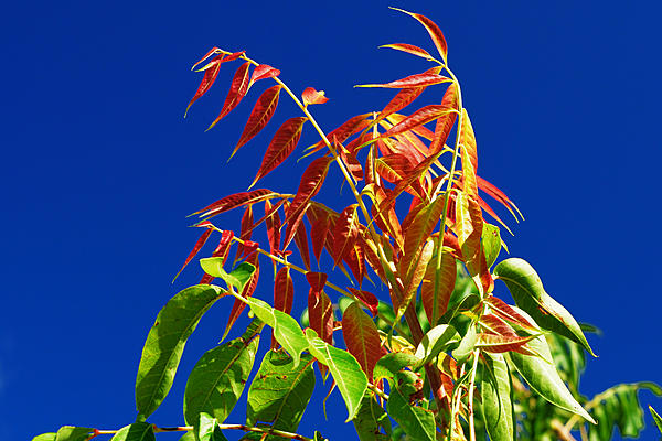 Weekly Challenge August 20 - 27: Contrasting Colours-color-contrast2.jpg